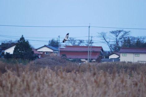 Yonamizu3